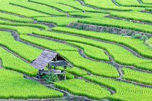 Groene rijstterrassen van Henny Hagenaars