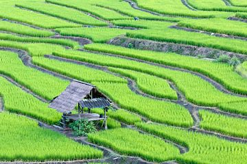Groene rijstterrassen