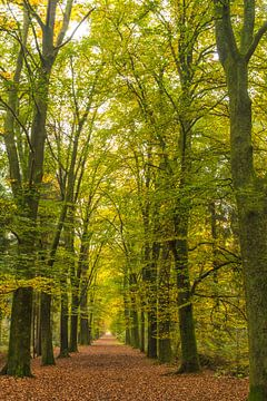 herfst18 von Geertjan Plooijer