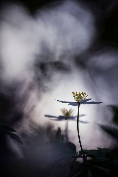 Believe in magic van Bob Daalder