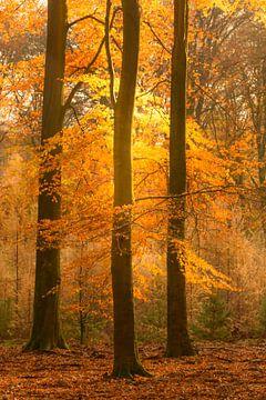 Zonnig bos tijdens een mooie herfstdag van Sjoerd van der Wal