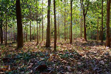 Stiller Wald von George Haddad