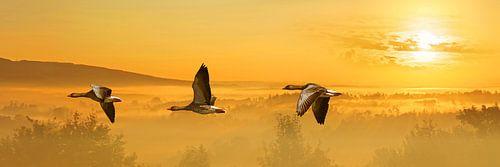 Der Flug der Wildgänse in Panorama von