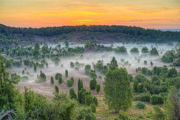 Doodsoorzaak in de Lüneburger Heide van Michael Valjak