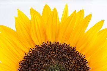 Sonnenblume aus nächster Nähe von Leontine van der Stouw