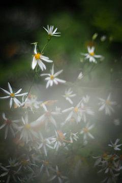Romantische witten von Marianne Hijlkema-van Vianen