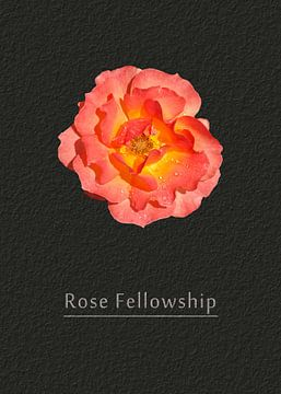 Rose Freundschaft von Leopold Brix