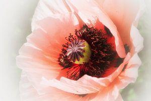 Coquelicot rosé  (rose klaproos ) van Yvonne Blokland