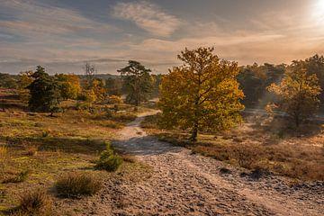Brunssummerheide während der goldenen Stunde im Herbst von John van de Gazelle