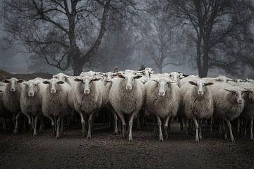Beware of the sheep van SEE ME fotografie