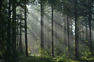 Zonnestralen in bos op herfstmorgen