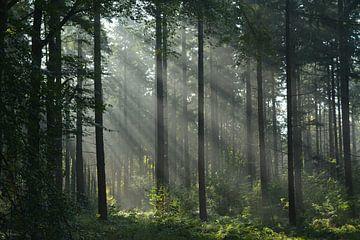 Morgenstimmung im Wald von Klaas Dozeman