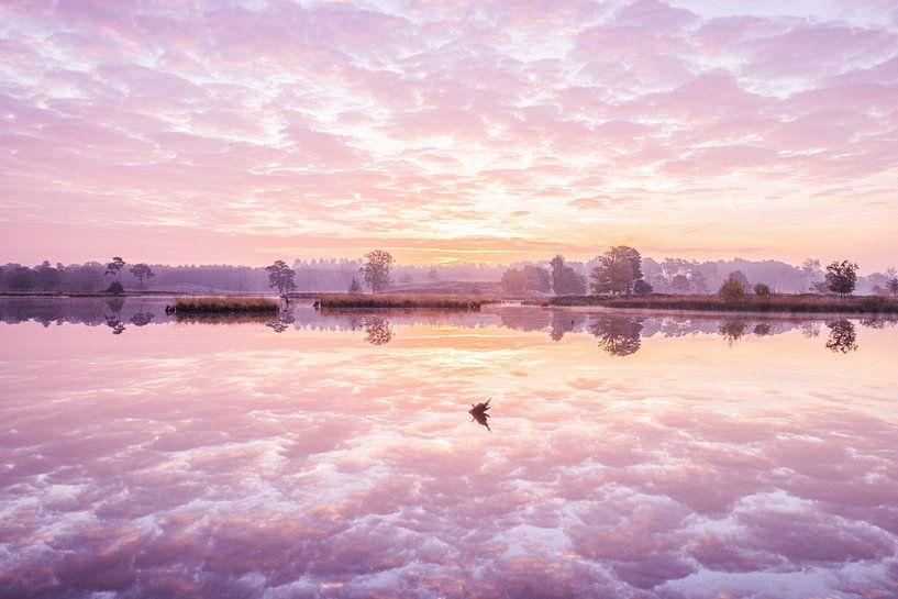 Sunrise above a fen van Elroy Spelbos