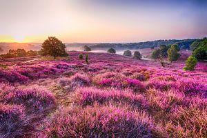 Precious Purple van Marcel Moonen