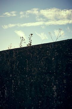 Individuele planten gluren achter een muur van Michael Moser