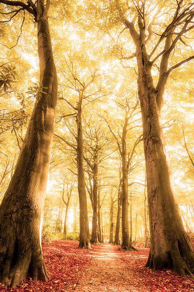 Path of a Dreamer van Cho Tang