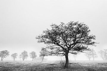 Baum im Schilfbett von Wilko Visscher