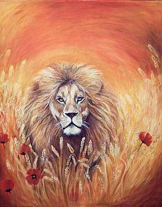 Lion in harvestfield.....