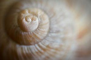 Close-up van een slakkenhuis van Heiko Kueverling