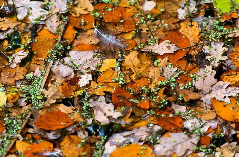 autumn van Franc Wiedenhoff