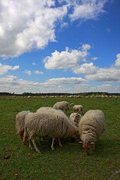 Drents landschap von Leon van Voornveld