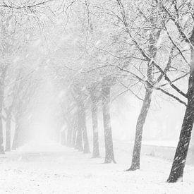 Sneeuwbui van Ton van Buuren