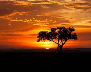 Acaciaboom bij zonsondergang. van
