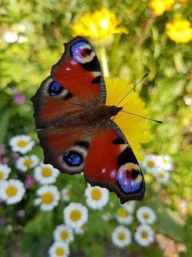 Vlinder van Brigitte Hofman-Balfoort