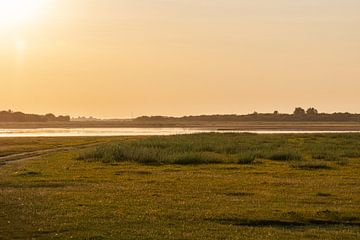 Die goldene Stunde in der Natur von Arisca van 't Hof