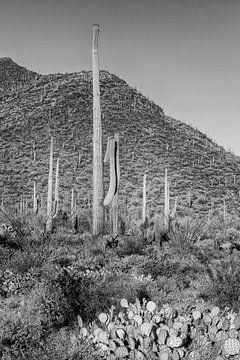 Impression du paysage du parc national Saguaro | Monochrome sur Melanie Viola