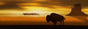 Der einsame Bison