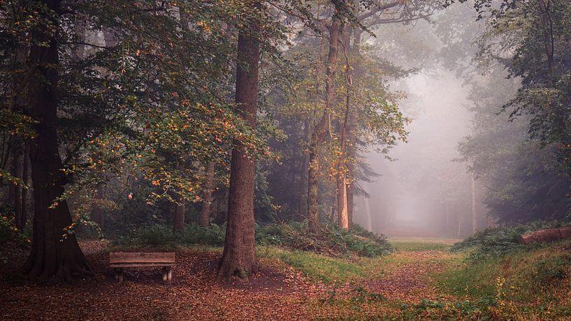 Herfst in het Slochterbos van Marga Vroom