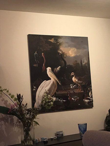 Klantfoto: Een pelikaan en ander gevogelte bij een waterbassin, 'Het drijvend veertje' van Hollandse Meesters, op print op doek