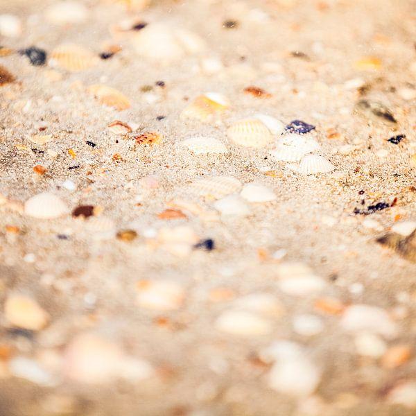 Schelpen op het strand van Shoots by Laura