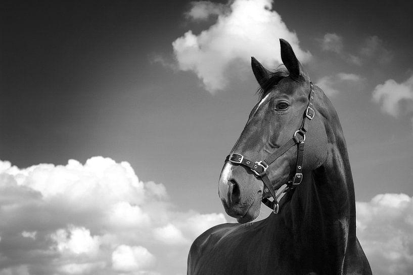 Klassiek paard van Mariska Hofman