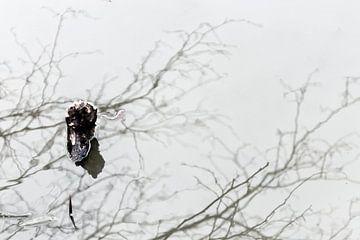 Abstract beeld van sloot van Marianne van der Zee