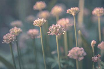 Blumen Teil 173