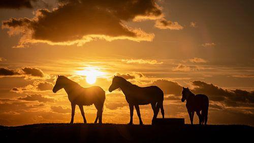 Silhouet van 3 paarden tijdens zonsondergang