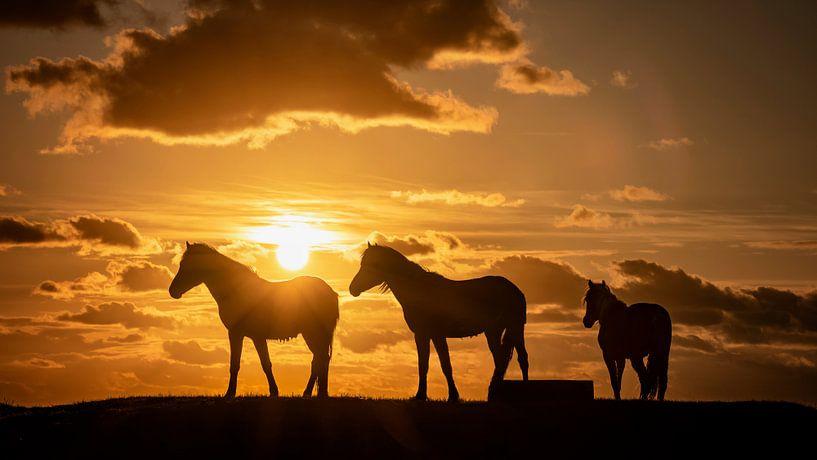 Silhouet van 3 paarden tijdens zonsondergang van Martijn van Dellen