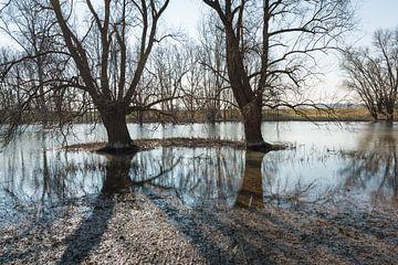 Nackte Bäume, die sich in der Wasseroberfläche spiegeln. von Ruud Morijn