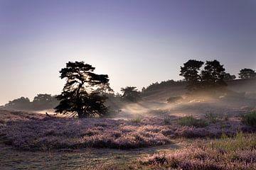 morgens auf dem Moor von Ronenvief