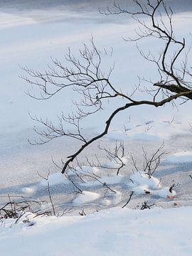 Winters stilleven van Lotte Veldt