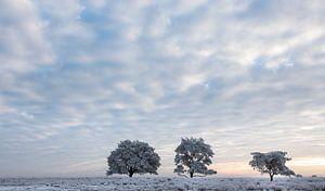 Koude winterochtend van