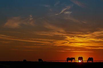 Pferde bei Sonnenuntergang von Caroline van der Vecht