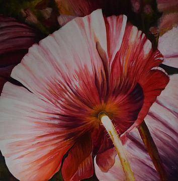 pavot1 rose sur Janny Schilderink