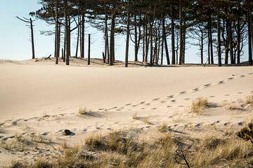 Footprint in dune sand sur Nannie van der Wal