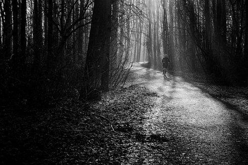 Amsterdamse bos van