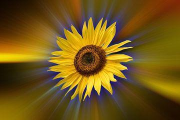 Zonnebloem tegen een kleurrijke abstracte achtergrond van Harry Adam
