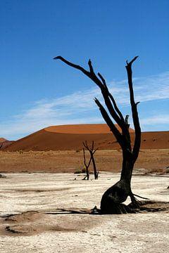 Deathvlei Namibië van Saskia van den Berg Fotografie