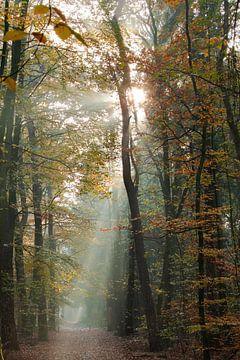 Nebliger Sonnenaufgang im Wald von Zeister in Zeist! von Peter Haastrecht, van